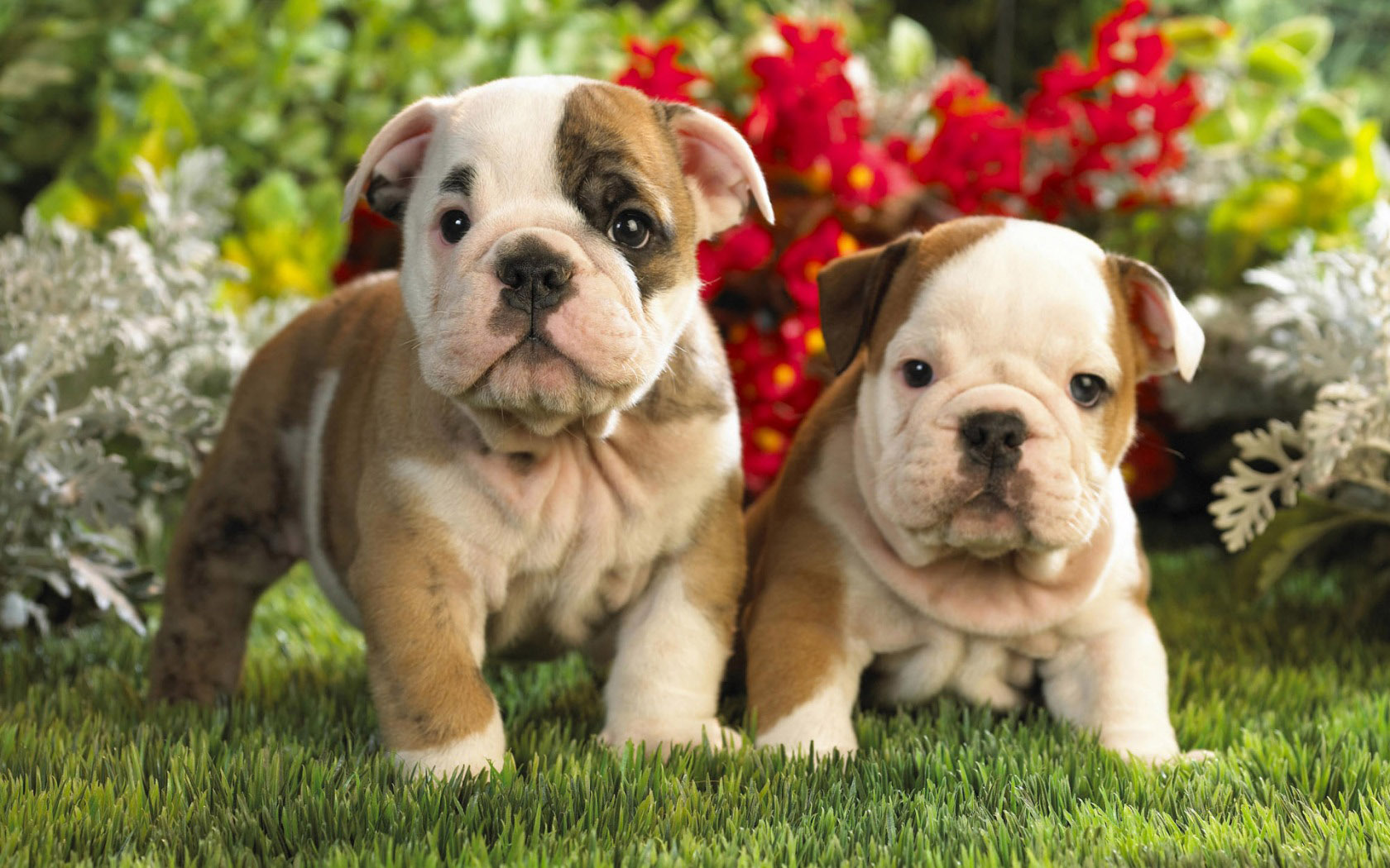 Quick Guide And Introduction Tо Pet Photography
